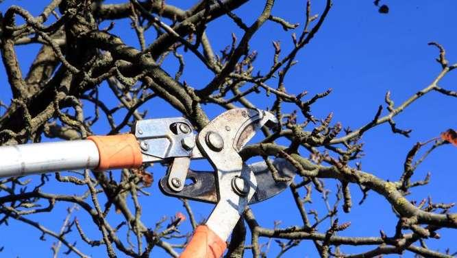 schnitt f r den obstbaum wann ist der richtige zeitpunkt garten. Black Bedroom Furniture Sets. Home Design Ideas