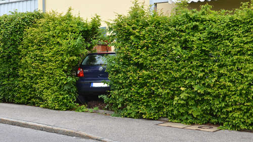 Polo landet in Hecke