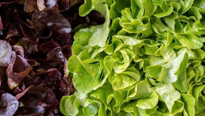 salat und spinat nicht in papiert ten aufbewahren gesundheit. Black Bedroom Furniture Sets. Home Design Ideas